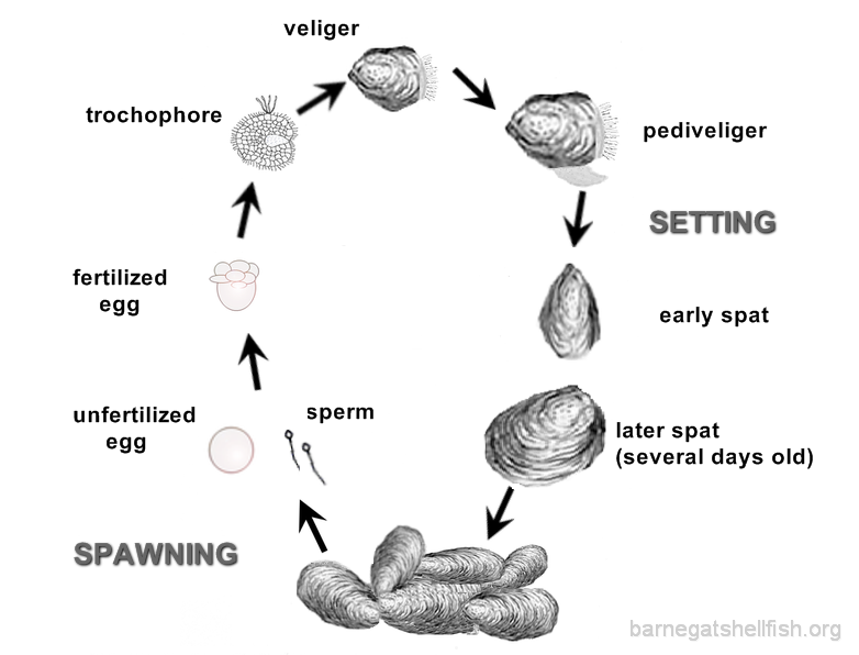 The life of a sperm